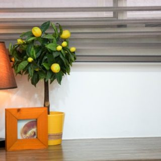 mobila birou directorial
