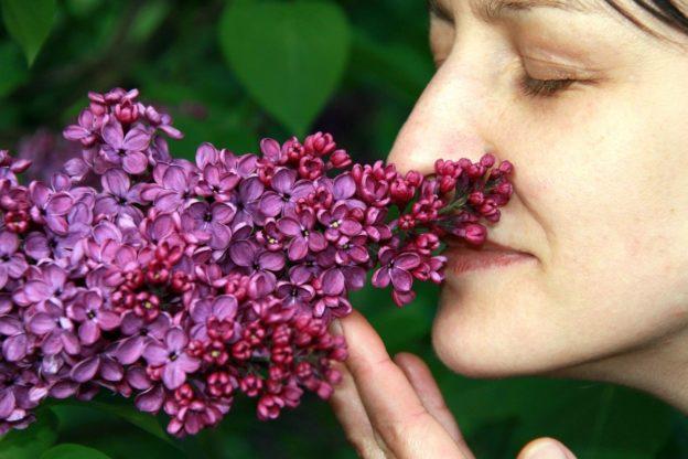 arome, mirosuri